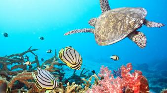 Water animals fish coral sealife angel wallpaper