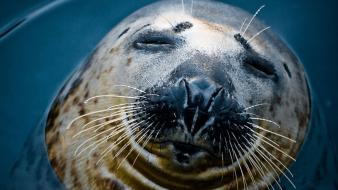 Water close-up nature seals animals whiskers Wallpaper