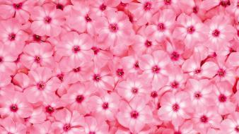 Close-up flowers pink background Wallpaper