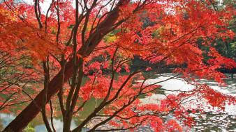 Japan nature trees autumn (season) leaves wallpaper