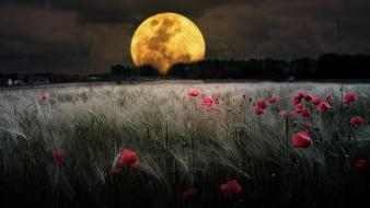 Clouds trees moon grass poppies skies wallpaper