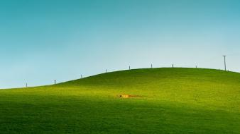 Grass new zealand farmland wallpaper