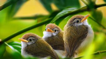 Green white birds animals leaves brown branches baby wallpaper