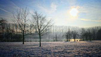 Landscapes nature winter sun trees garden belgium sky wallpaper