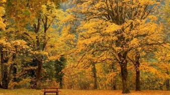 Leaf trees leaves gold bench october autumn wallpaper