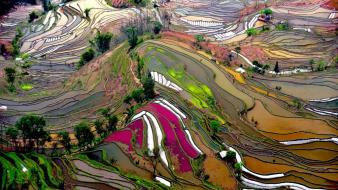 Mountains landscapes china ricefields wallpaper