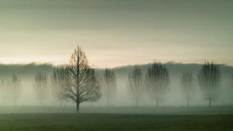 Nature trees grass fog new zealand wallpaper