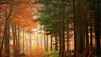 Nature trees yellow wood seasons autumn border wallpaper