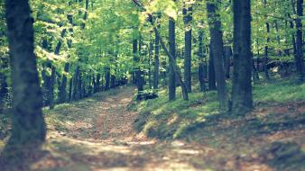 Trees forest path wallpaper