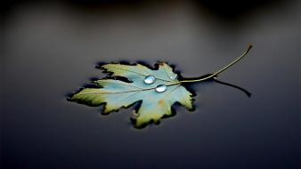 Water floating leaves drops macro wallpaper