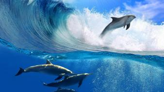 Water nature waves animals dolphins wallpaper