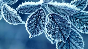 Winter snow trees leaves seasons frost icicles Wallpaper