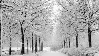 Winter snow trees parks wallpaper