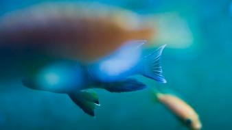 Abstract fish Wallpaper