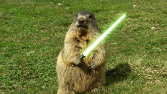 Animals grass lightsabers funny jedi wallpaper