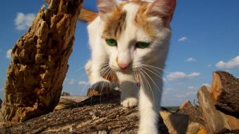 Close-up nature artistic cats animals pets skies Wallpaper