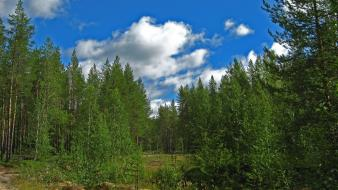 Clouds landscapes nature forest wallpaper