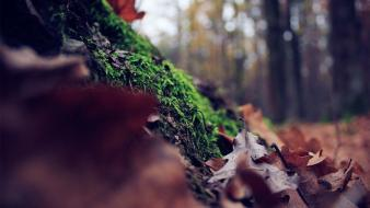 Forest leaves moss ground focused Wallpaper