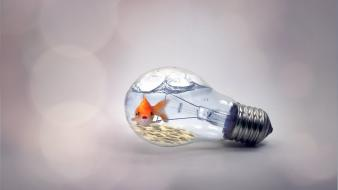 Goldfish light bulbs creative wallpaper