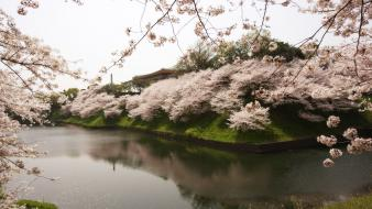 Japan landscapes nature cherry blossoms reflections wallpaper