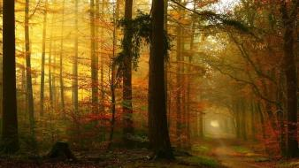 Landscapes nature forests paths down sun rays dawning wallpaper