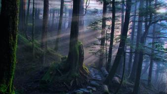 Landscapes nature forests pathway mystical dawning wallpaper