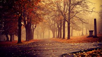 Landscapes nature trees leaves mist autumn Wallpaper