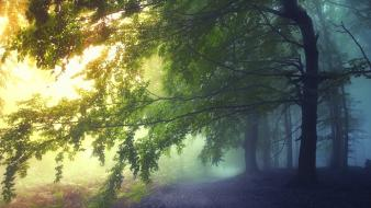 Landscapes nature trees paths fairies mystical dawning wallpaper