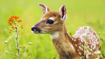 Nature animals deer fawn baby Wallpaper