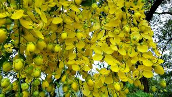 Nature trees flowers yellow Wallpaper