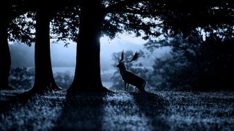 Trees animals deer sunlight monochrome stag wallpaper