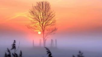 Trees dawn fog wallpaper