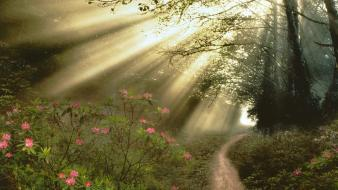 Trees wood track morning light beams spring wallpaper