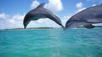 Water animals dolphins sea Wallpaper