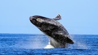 Whales seascapes Wallpaper