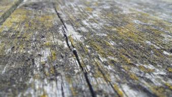Wood moss texture wallpaper