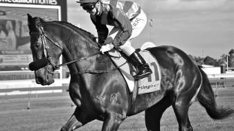 Animals sports horses monochrome jockey wallpaper