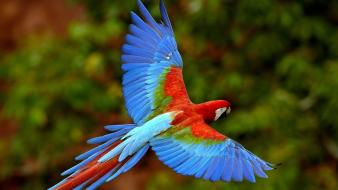 Birds animals parrots scarlet macaws macaw colors exotic wallpaper
