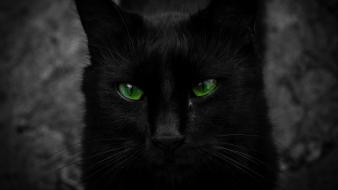 Cats animals black cat green eyes wallpaper
