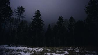 Dark night forest canada christian quebec evergreens Wallpaper