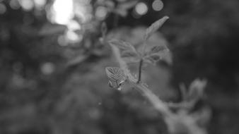 Green black and white forests leaves plants bokeh wallpaper