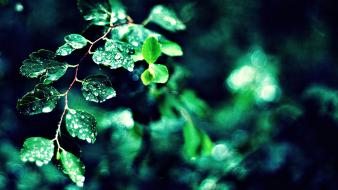 Green nature leaves macro wallpaper