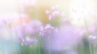 Light nature flowers pink wallpaper