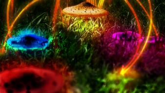 Multicolor mushrooms plants psychedelic digital art photomanipulation shrooms wallpaper