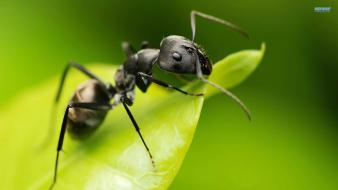 Nature animals ant wallpaper