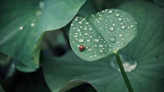 Nature animals leaves bugs waterdrop wallpaper