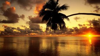 Sunset nature facebook timeline cover coconut tree wallpaper