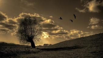 Trees birds fields lonely Wallpaper