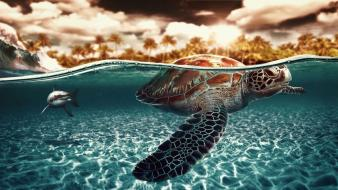 Water turtles sharks artwork palm trees split-view sea wallpaper