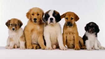 Animals dogs wallpaper